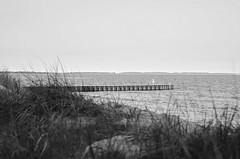 Ystad Beach (Agge92) Tags: dog beach 50mm ystad 18g