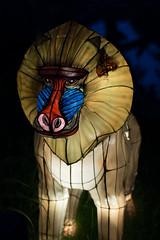 _DSC9552_2 (Elii D.) Tags: light fish flower animal night zoo monkey neon dragons lantern lampion dargon