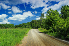 Sugarcamp Mountain (17) (Nicholas_T) Tags: road trees summer sky clouds pennsylvania cumulus creativecommons dirtroad gravelroad endlessmountains loyalsockstateforest lycomingcounty sugarcampmountain sugarcampmountainroad
