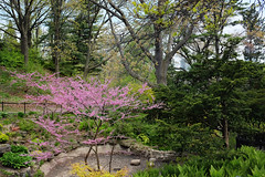 High Park (Yuli Mitsner) Tags: toronto ontario canada nature photography photo highpark quiet peace fuji blossom weekend walk blossoms saturday peaceful bloom x100t