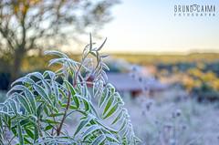 Geada (Bruno_Caimi) Tags: blue winter sky white cold detail verde green ice gelo branco azul nikon interior paisagem cu campo stio inverno frio geada d5100 brunocaimi