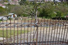 030516 073 (Jusotil_1943) Tags: 030516 sinhojas arboles fences hierro oxido portilla chabola