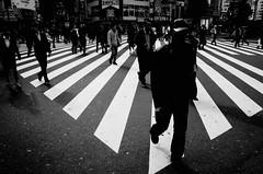 .at the crossroads iv. (Shirren Lim) Tags: street photography tokyo shinjuku blackandwhite monochrome people crossroads japan oldman ricoh graphic lines abstract outdoor park symmetry