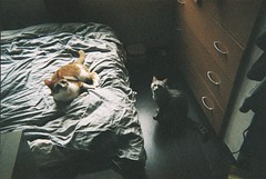( ourutopia) Tags: film fuji fujifilm fujicolor 400 simpleace quicksnap singleusecamera 30th 30years anniversary room bed cat mew meow miao neko