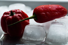 Chilies on Ice (FIDDYONE) Tags: water melting redhot chilies icecold liquidity hotcold icemacro macromondays