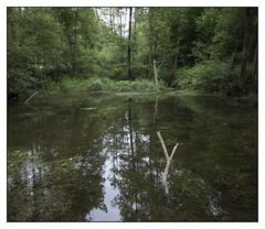 Rennes Forest #8 (Oeil de chat) Tags: fujifilm x20 couleur foret vert nature serie promenade