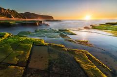 Turrimetta Headland at Sunrise (Orange Orb Photography) Tags: narrabeenhead rock moss northernbeaches ocean turrimeta beach australia seascape exterior outdoor sun longexposure sunrise sea