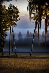 Ranch Sunrise Fog (steve rubin-writer) Tags: sunrise fog ranch sun sunset wow best amazing serene montana northfork glacier park tree trees aspen aspens