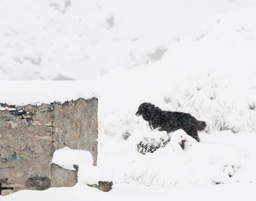 Snow in Yak Kharka