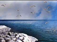 Toronto Ontario ~ Canada  ~ Lake Ontario ~ Winter Sea Gulls