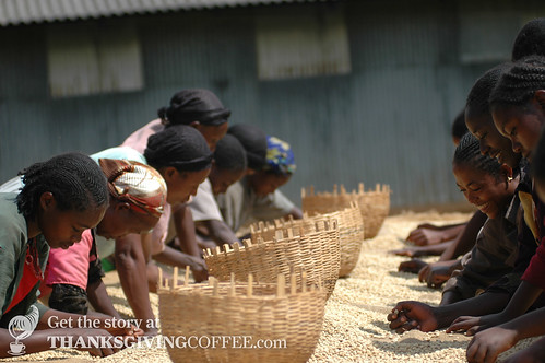 Drying and Turning Coffee in Ethiopia