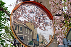 Cherry Blossom Mirror (<<Jamms>>) Tags: pink reflection japan cherry landscape tokyo mirror spring blossom blossoms bloom  cherryblossom  yokohama blooms