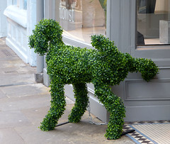 York - Well Groomed but Badly Trained P1020050mods (Andrew Wright2009) Tags: york uk england dog green leaves topiary britain joke yorkshire scenic humour wit peeing