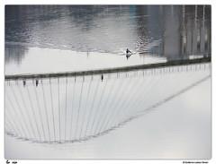 la ra (wuploteg1) Tags: spain country bilbao calatrava campo bizkaia basque vasco euskalherria ria euskadi vizcaya bilbo pais nervin nervion biscay ibaizabal ra pas zubizuri volantin volantn nerbioi biskai nerbin nerbion biscai