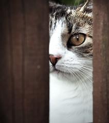 Prison Cat (majus26) Tags: cat fence olympus katze zaun omd
