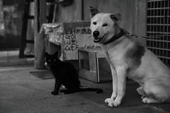 Street cat&dog #173 (crossroadk12) Tags: canon eos 5d markii f4l ef24105mm