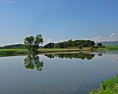 Summerland (Bricheno) Tags: trees summer field reflections river scotland escocia cart szkocja renfrew schottland whitecart scozia rivercart cosse kilpatricks  esccia  blackcart  bricheno scoia