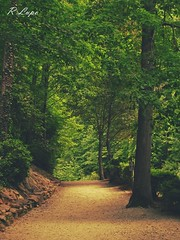 Down the Path to Beautiful (R.F. Lupo (random off and on-ness, more off)) Tags: morning trees light sunlight green beautiful beauty golden rocks path dirt goldenlight goldenglow