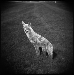 Goose Deterrent (Voxphoto) Tags: park bw holga trix lawn annarbor sq carnivore decoy orfoxinabox