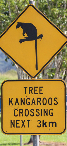 Tree Kangraroo Road Sign
