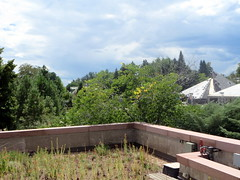IMG_5804 (Autistic Reality) Tags: roof plants usa plant green gardens america garden landscape outside outdoors landscapes us colorado exterior unitedstates outdoor unitedstatesofamerica denver roofs botanicalgardens botanicalgarden greenroof exteriors yorkstreet coloradostate denverbotanicgardens outsides greenroofs energyefficient denvercounty stateofcolorado cityofdenver rockymountainwest cityandcountyofdenver