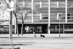 (Vctor Mndez (VM FotoVisual)) Tags: barcelona street windows blackandwhite woman dog building blancoynegro calle mujer shadows streetphotography perro sombras fotografacallejera ventamas samsungnxmini vmfotovisualstreet edoficio