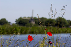 Inge Hoogendoorn (ingehoogendoorn) Tags: red summer holland mill windmill landscape thenetherlands depthoffield brightlight zomer poppy poppies rood molen klaproos windmolen shallowdepthoffield klaprozen scherptediepte poppyflowers dutchbikes