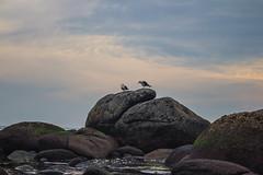 (troubleofchaos) Tags: chile beach cloudy playa gaviotas puntadetralca