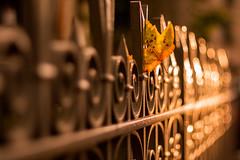 LVM - Una verja (Nathalie Le Bris) Tags: sunset hoja fence atardecer leaf treasure tesoro verja hff lvm