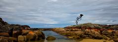 those days would never end (keith midson) Tags: sky tree rocks shoreline australia coastal tasmania lone eastcoast bayoffires binalongbay