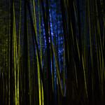 嵐山花灯路 竹林 / Illuminated Bamboo Forest,  Arashiyama Hana-Toroh thumbnail