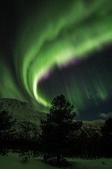around the tree (christian.denger) Tags: alps norway night eos lights aurora fjord northern walimex borealis 6d lyngen