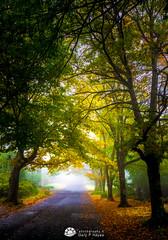 Autumn Morn II (Gary Hayes) Tags: autumn trees blackheath australia bluemountains mount wilson oceania mountvictoria mountwilson