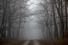 Foggy forest (Frame_finder) Tags: