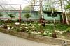 Zoo Bratislava 18.04.2015 2 (Fruehlingsstern) Tags: zoo zebra giraffe bratislava bär gibbon dinosaurier katta schimpanse nashorn dinosaurierpark roterpanda zoobratislava weisetiger weiselöwen panasonicfz200