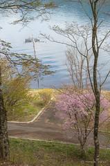 Spring morning at Lake Yamanaka (yamanaito) Tags: flickr