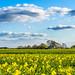 Bjerre windmill, Stenderup, Denmark - Landscape photography