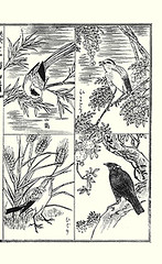 Top left – blue magpie; Top right – heavenly bamboo and brown-eared bulbul; Bottom left – barley and skylark; Bottom right – pomegranate and common hill myna (Japanese Flower and Bird Art) Tags: blue flower bird art barley japan japanese book hill picture pomegranate bamboo magpie common heavenly poaceae nihonga domestica nandina intaglio bulbul religiosa myna punica granatum corvidae lythraceae tokuyama vulgare yamano hordeum browneared ixos ebenaceae sturnidae pycnonotidae gracula amaurotis urocissa erythrorhyncha readercollection