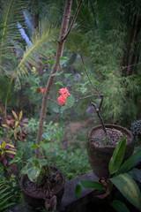 (kuuan) Tags: ltm bali flower canon garden 50mm dof bokeh f14 rangefinder mf manualfocus ubud wideopen 1450 m39 f1450mm ilce7 canonltmf1450mm