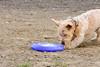 16-05-15_untitled_118 (Daniel.Lange) Tags: dog philadelphia dogs buster dogdayafternoon spado columbussquarepark