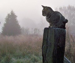 Cat with fog. (Gerald Barnett) Tags: morning trees usa pet cats pets mist art nature beautiful beauty weather animal animals misty fog mystery cat outdoors grey countryside morninglight illinois haze weeds feline mood peace availablelight gray foggy peaceful tranquility atmosphere naturallight calm serenity mysterious catus mystical felines serene hazy inspirational contemplative tranquil oldwood mystic bestpicture greysky serenitynow tabbycats bestpic greycats petphotography bestphoto naturalcolor animalcloseups outdoorphotography perfectpicture treesinmist perfectpic catposes catulus