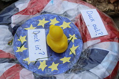Conflicted duck (scotch egg) Tags: kent shoreham darent brexit shorehamduckrace
