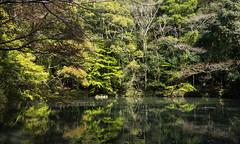 DSC07479 (Ustulo) Tags: japan spring ise iseshi isegrandshrine