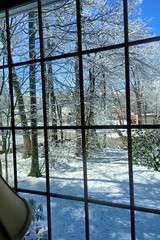 Winter 2016 through my living room bay window (Massachusetts) (Scorpiol13) Tags: trees winter snow outdoors branches snowstorm frosty winterwonderland snowcovered snowedin