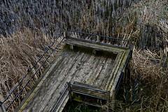 Window on the Waterfront Park - Macatawa Marsh - Holland Michigan (Meridith112) Tags: wood holland texture grass mi bench spring nikon midwest michigan april boardwalk weathered marsh 2016 ottawacounty marshgrass nikon2485 nikond610 windowonthewaterfrontpark macatawamarsh