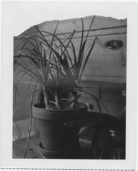 Polaroid Type 54 (Theolde) Tags: polaroid instant lf type54