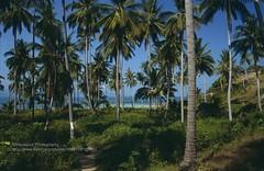 Koh Phangan, path to Leela Beach (blauepics) Tags: trees sea beach strand landscape thailand island asia meer sdostasien path palm insel ko 1991 southeast koh landschaft leela phangan weg palmen