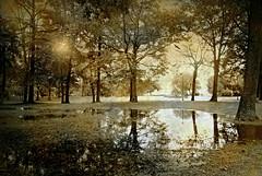 The After Rain (floralgal) Tags: trees nature puddle puddlereflections ryenewyork rainpuddle painterlylandscape westchestercountynewyork ryenewyorklandscape duskinryenewyork theafterrain
