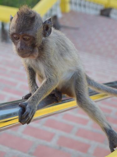 Wat Khao Takiab - Hua Hin, Thailand