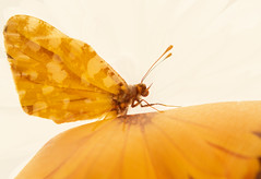 Mariposa (www.justigarcia.com) Tags: fauna mariposa insecto multiexposicin